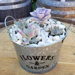 Flowers planter with succulent Rosette.